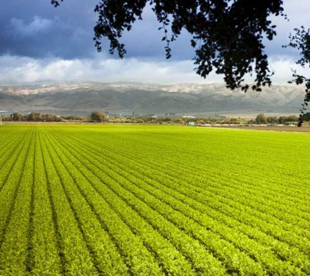 romania_farmland